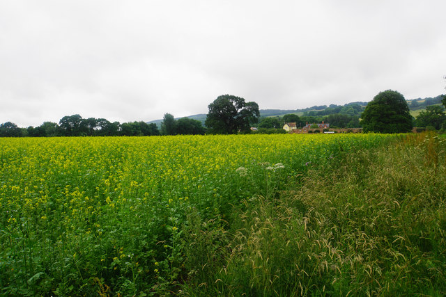 Oil seed rape near Terhill