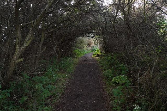 Path through the bushes at Aberlady Bay