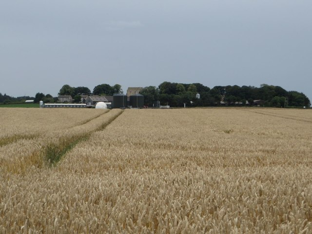 Arable field at Cockle Park