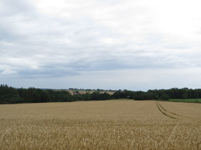 Arable field north of Cockle Park