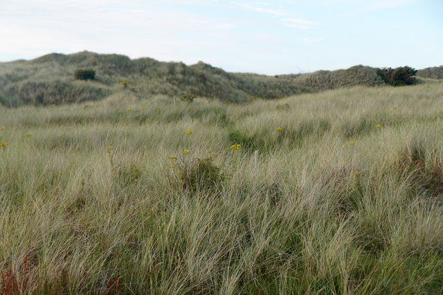 In the dunes at Aberlady Bay