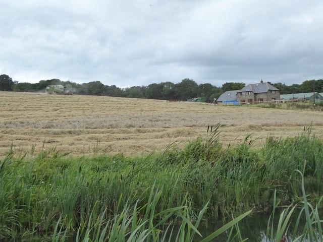 Harvesting at Holbrook Farm
