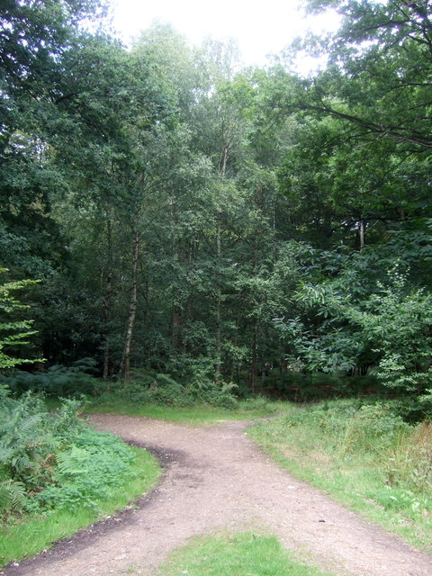 Track junction in Epping Forest