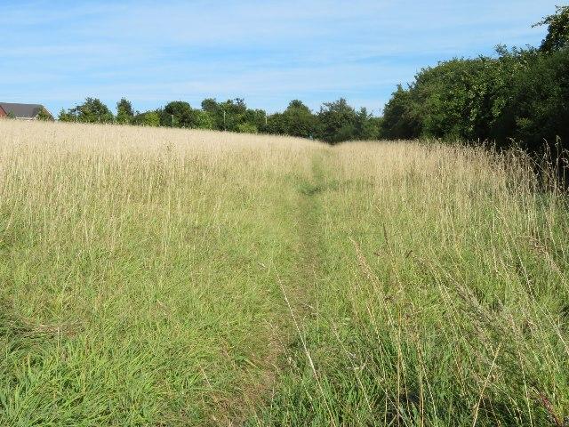 Wild corner of Giddings Field (106 acres)