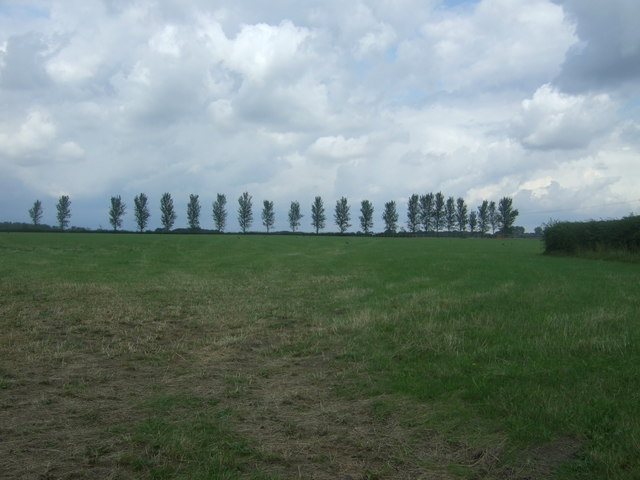 Grazing, Epping Upland