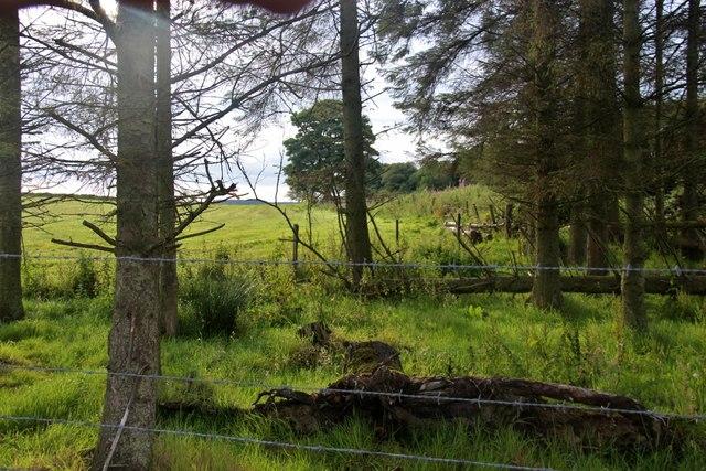 Tree shelter at field corner