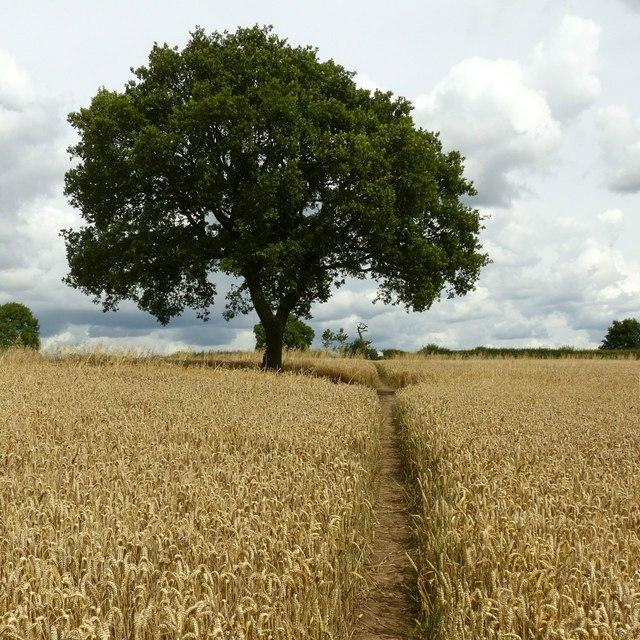 Footpath towards No Man's Lane
