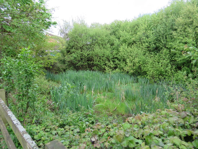 Merlin Gardens Pond