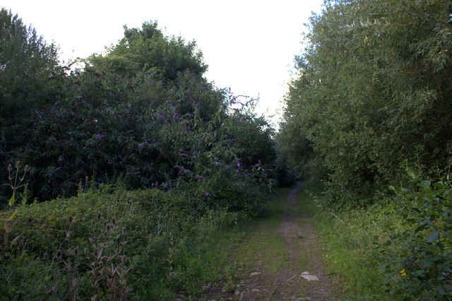 Path towards Horton
