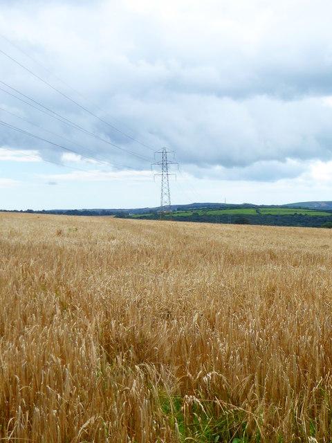 Field of barley near Helland