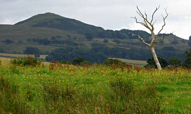 Knock Hill from Skelmorlie