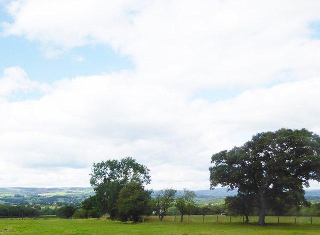 Grassland near Langho