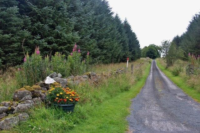 Access road to Bog