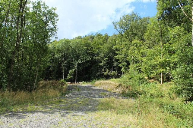 Track in Curchiehill Wood
