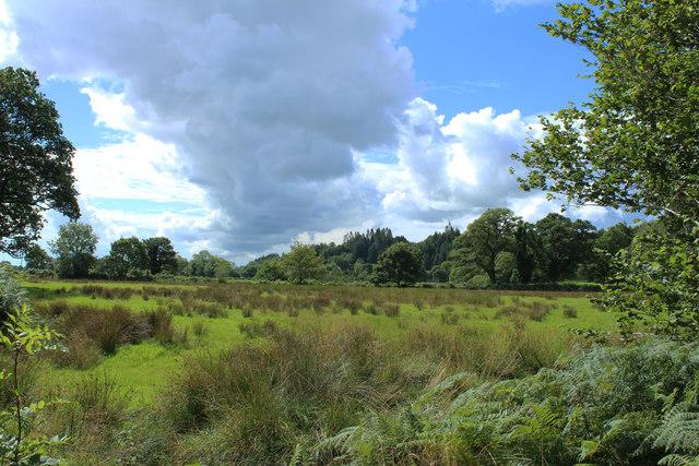 Wetland near Palnure