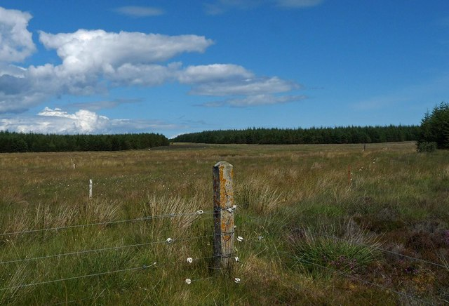 Junction of fences, Scoolary, Caithness