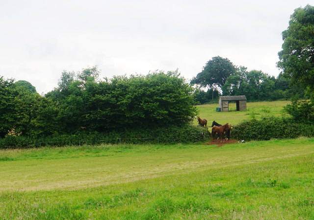 Conference of horses near Broomfield