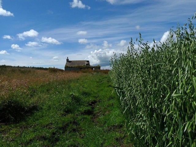 Ruined farmstead, Scoolary, Caithness