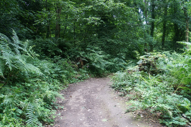Woodland path at Fyne Court
