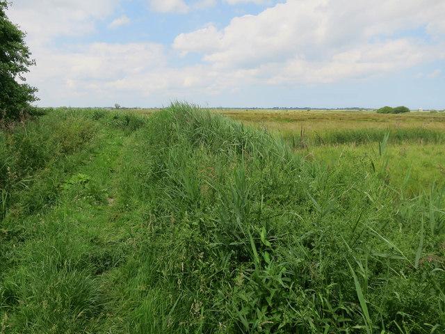 Path around Upton Fen