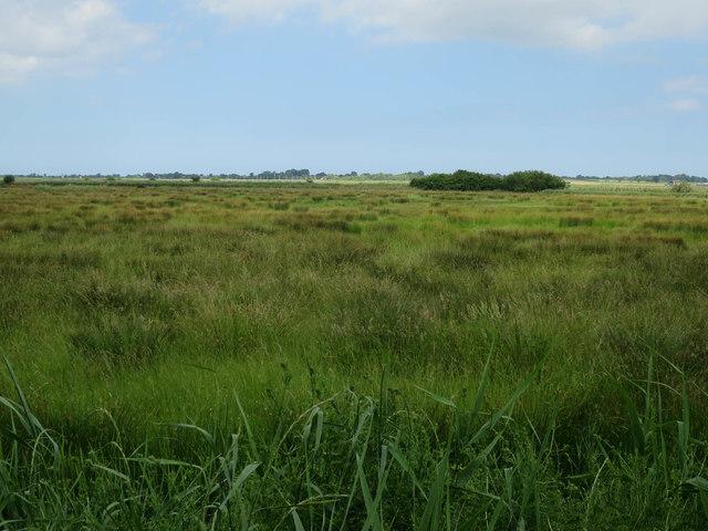Grazing marsh by Upton Fen