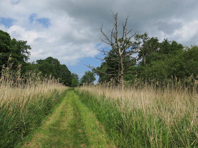 Reserve path, Upton Fen