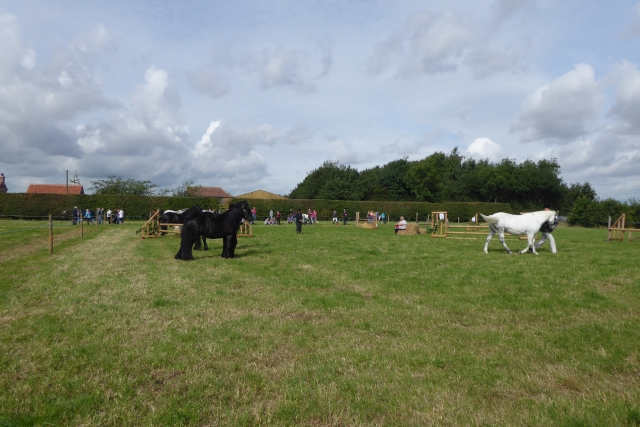 Tockwith Show: Horse ring