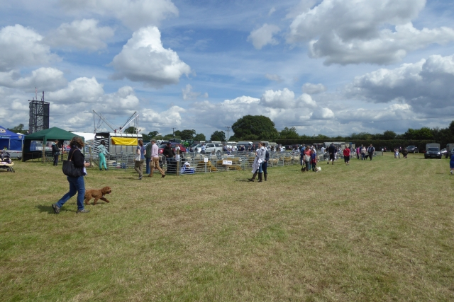 Tockwith Show: Towards the sheep pens