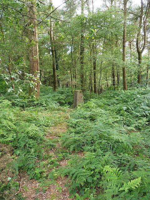 Buckton Hill trig