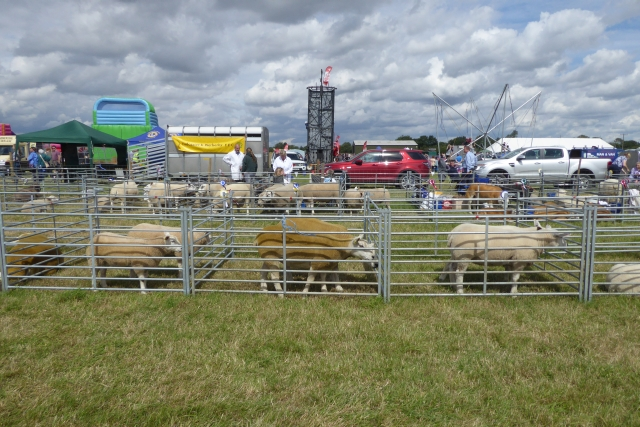 Tockwith Show: Sheep pens