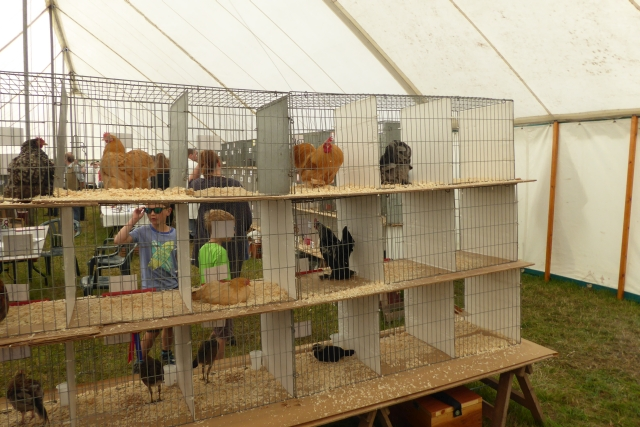 Tockwith Show: Poultry display