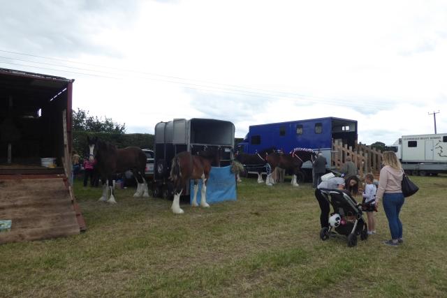 Tockwith Show: Heavy horses