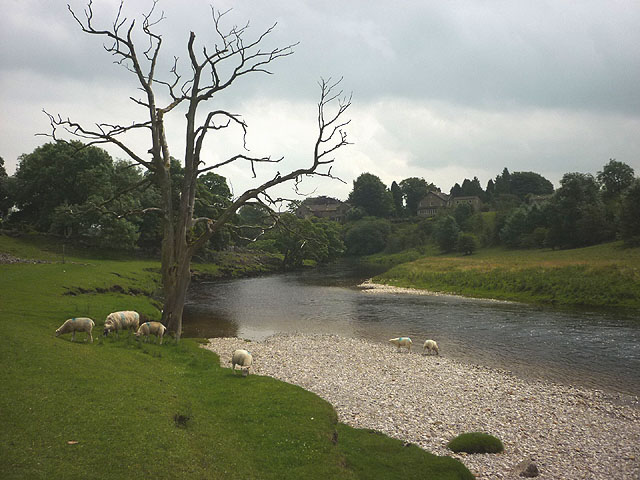 Sheep beside the Wharfe