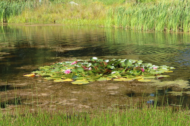 Lily Pads, Dumfries House Estate