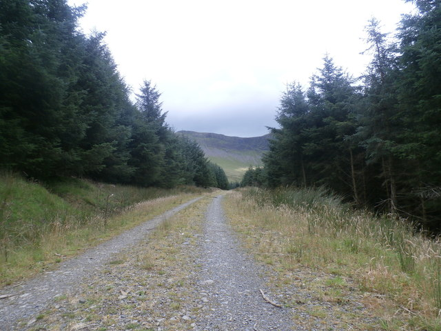 Forestry Track in Hobcarton Plantation