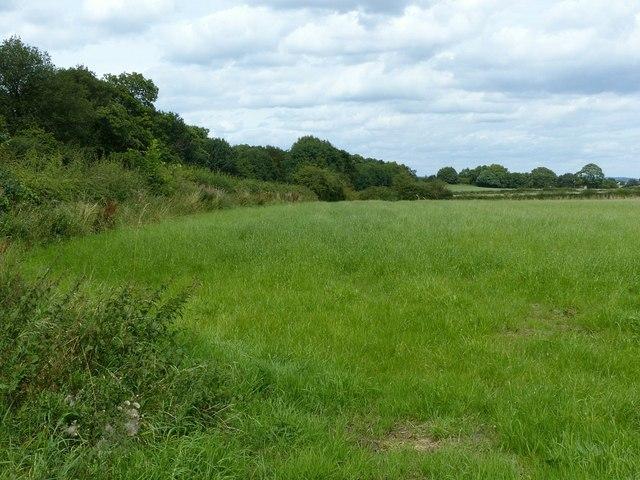 Field near Bartlewood Lodge