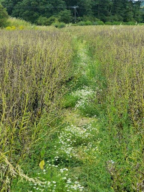 Camomile path