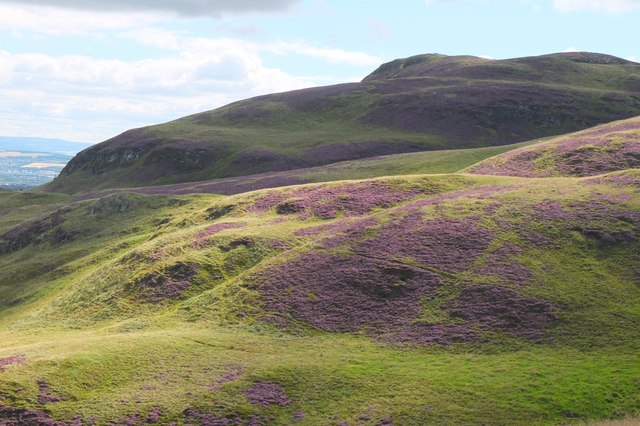 Heathery hillsides in the Pentlands