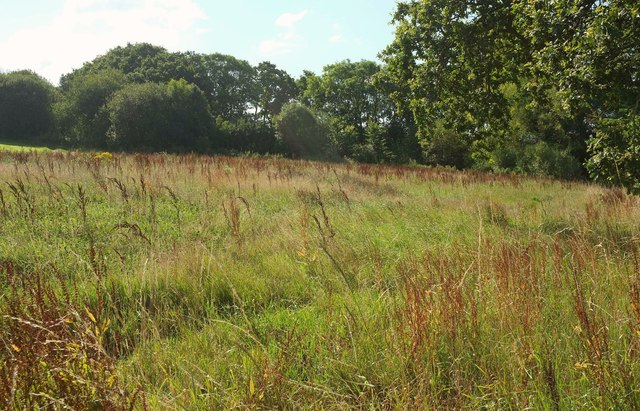 Field by the cricket ground, Woodbury