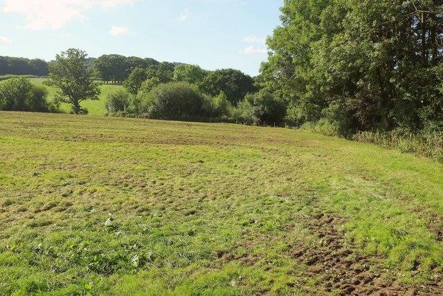 Grass field by Woodbury Wood
