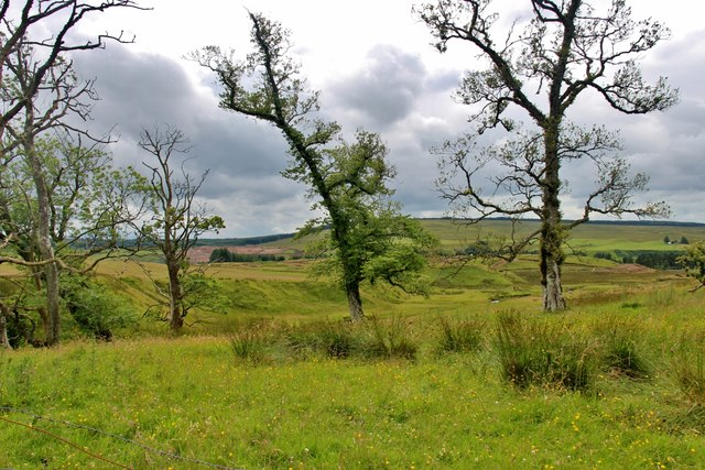 Trees edge the valley of Hall's Burn