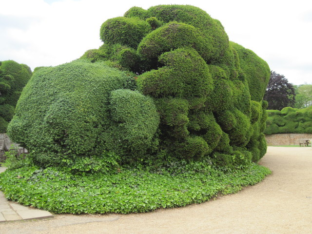 Fantastically shaped Yew hedge at Audley End
