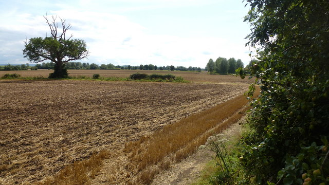 Harvested field on the Severn Flood Plain