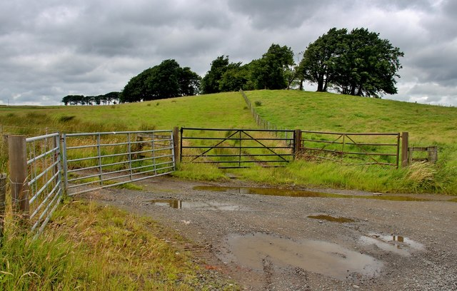 Array of field gates at Torfoot