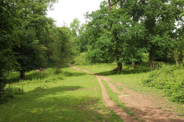 Path in Leigh Woods