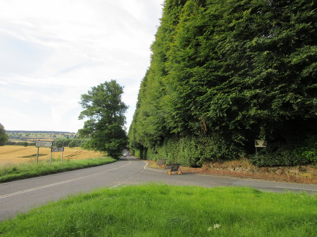 Northern end of the Beech Hedge