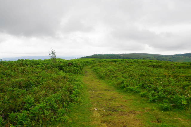 Path on Lydeard Hill