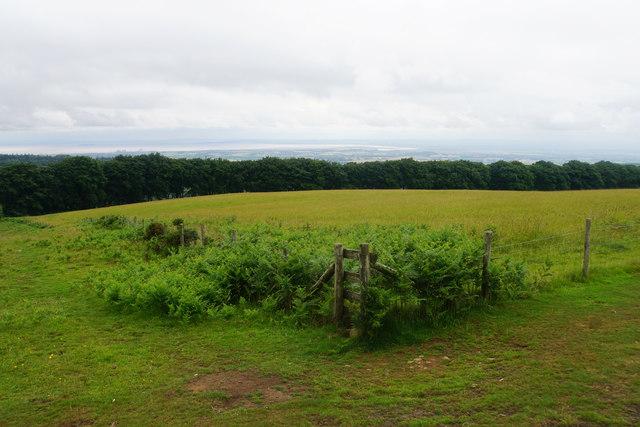 Fence corner on Lydeard Hill