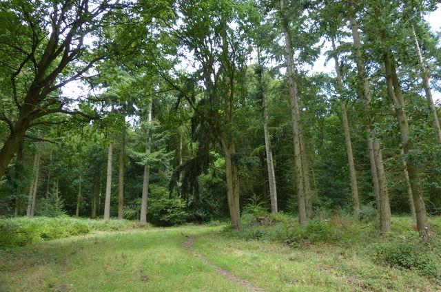Littlehill Plantation