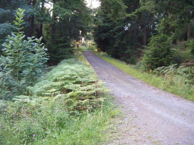 Forest track,Nest Plantation